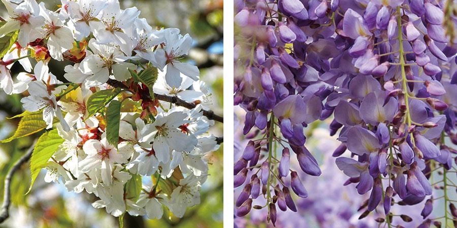 桜と藤のはちみつ