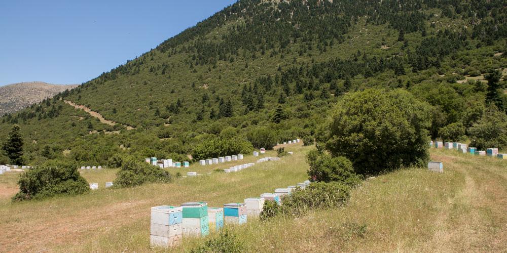 養蜂場 イメージ