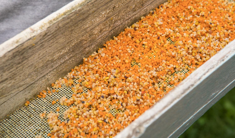 みつばち花粉 イメージ