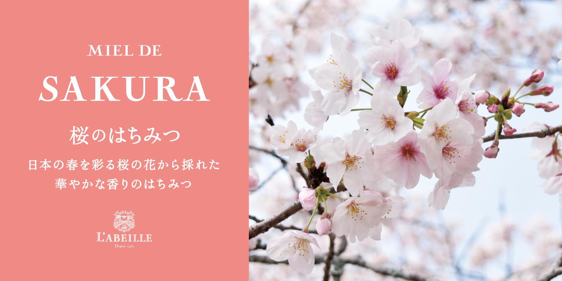 日本の春を彩る桜の花から採れた華やかな香りのはちみつ 桜のはちみつ