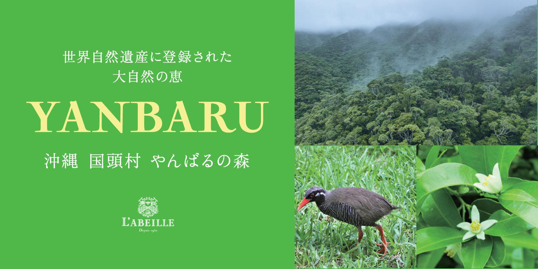 祝! 世界自然遺産登録 沖縄 国頭村「やんばるの森」のはちみつ発売